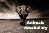 Test: Animals vocabulary