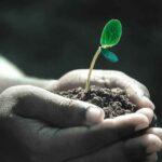 Pero…¿cómo nacen las plantas?