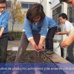 Beneficios de tener un huerto escolar en el colegio