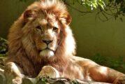 Nos vamos a la selva: un proyecto salvaje