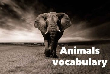 Test: Animals vocabulary