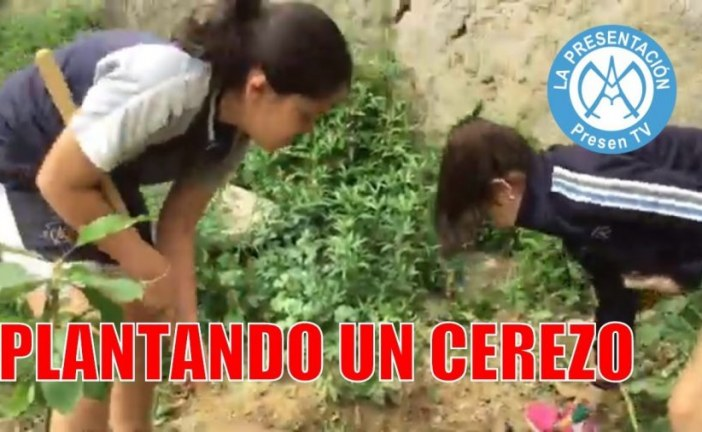 Cómo plantar un cerezo | Huerto escolar