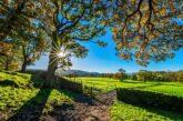 ¿Qué es la AGRICULTURA REGENERATIVA?