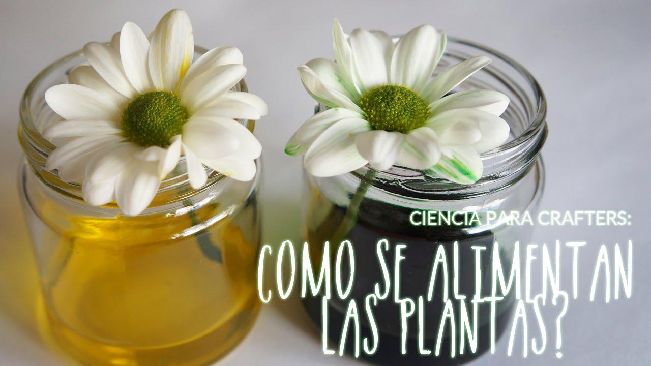 Proceso de alimentación de las plantas