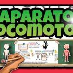 El Aparato locomotor | Educación Primaria