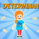¿Qué son los determinantes?¿Cuantos tipos de determinantes existen?